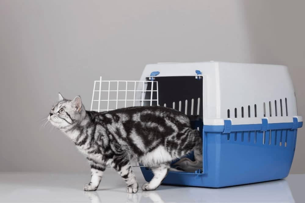 How To Train Your Cat To Ride In A Pet Carrier