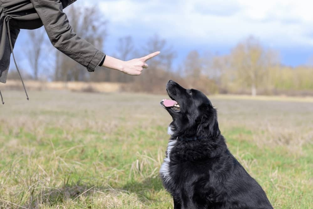Dog Respects You