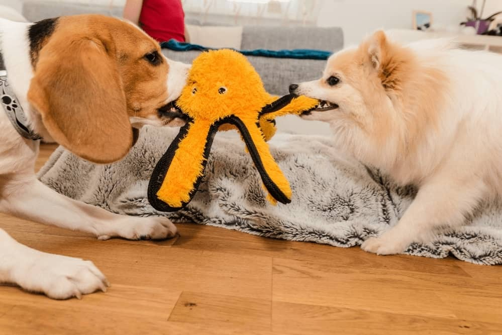 Dogs Fighting Over Toys