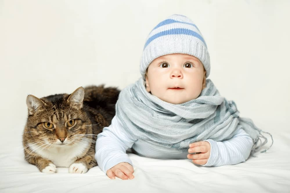 introduce cat to baby