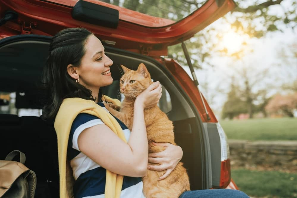 travel with a cat in car